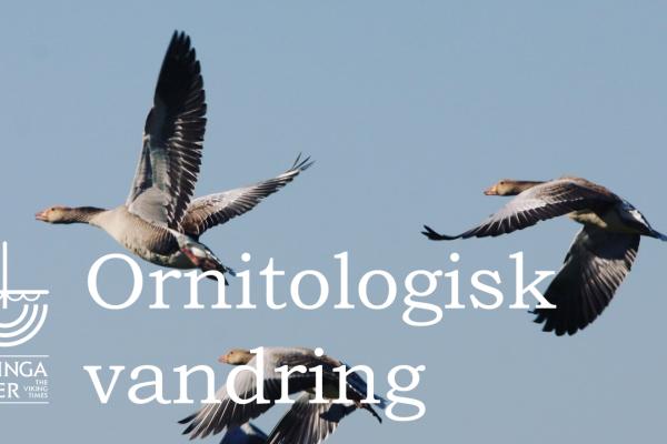 Ornitologisk vandring på VikingaTider