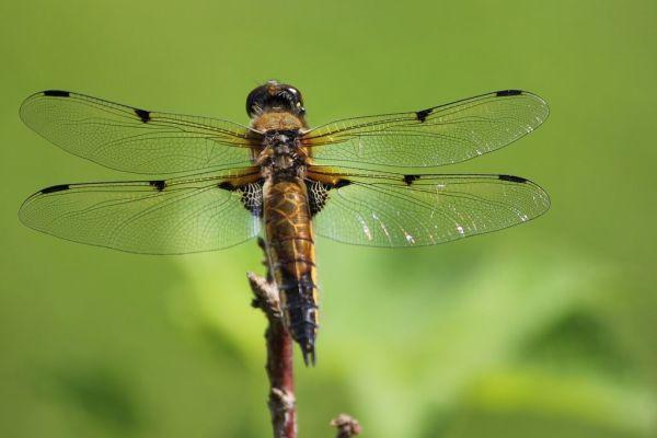 Insekternas dag